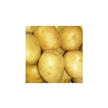 Poireaux, pommes de terre-Pommes de terre primeur- Sirtema au KG-GAEC BOCEL NON BIO