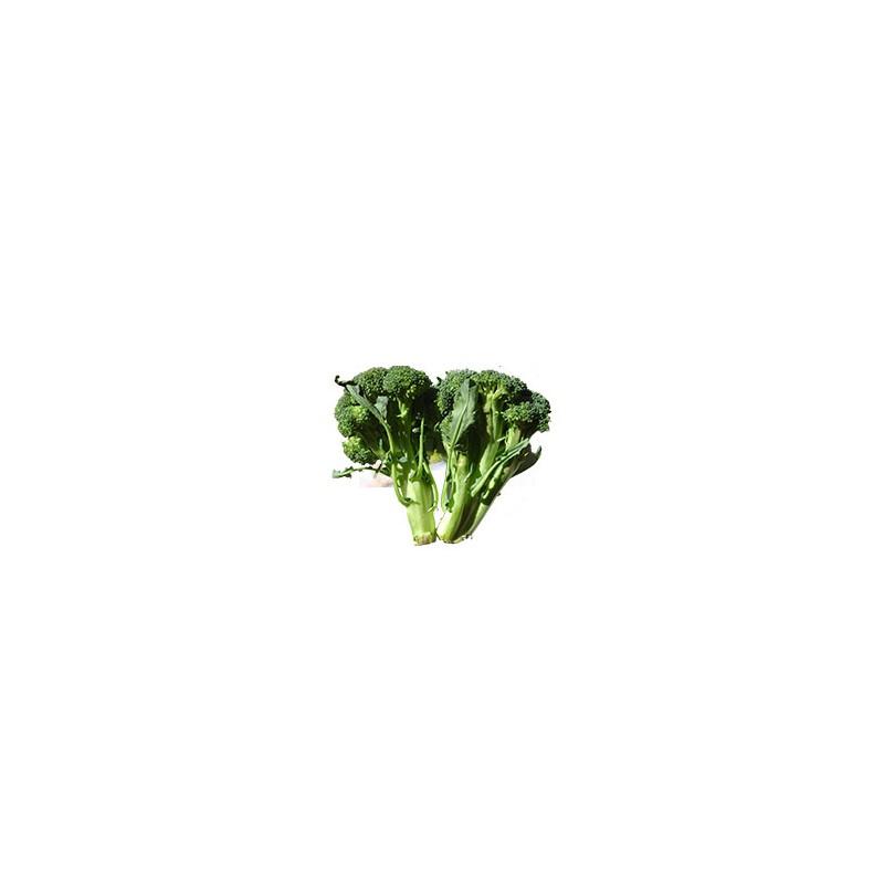 Légumes biologiques-Brocolis bio - 700 grs env-BIO RENNES