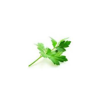 Fruits et légumes-Persil Plat - La Botte-SUBERY NON BIO