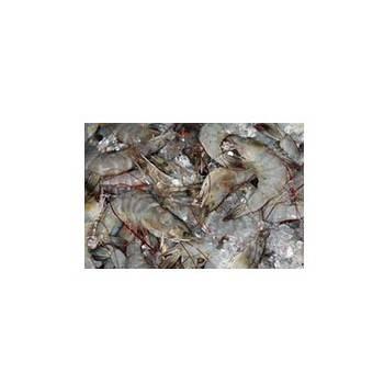 Accueil-crevettes grises (cuites) - 100 grs env.-POISSONNERIE SOHIER