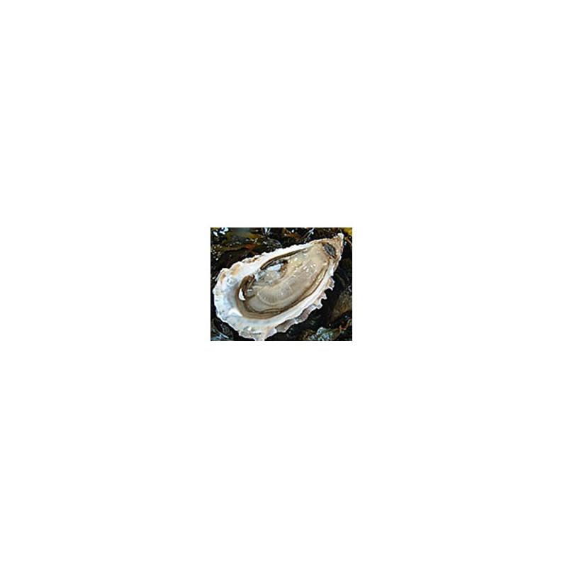 Poissonnerie-huitres creuses de cancale N°3 - La douzaine-La criée Rennaise