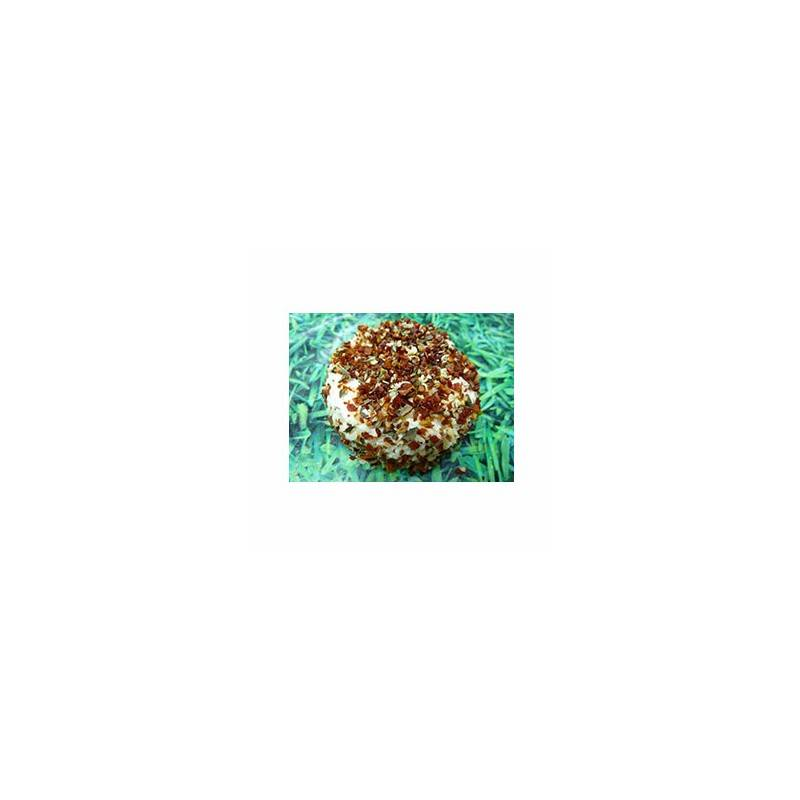 Le frais-crottin chevre bio bruschetta - 100 g-LA CAPRARIUS