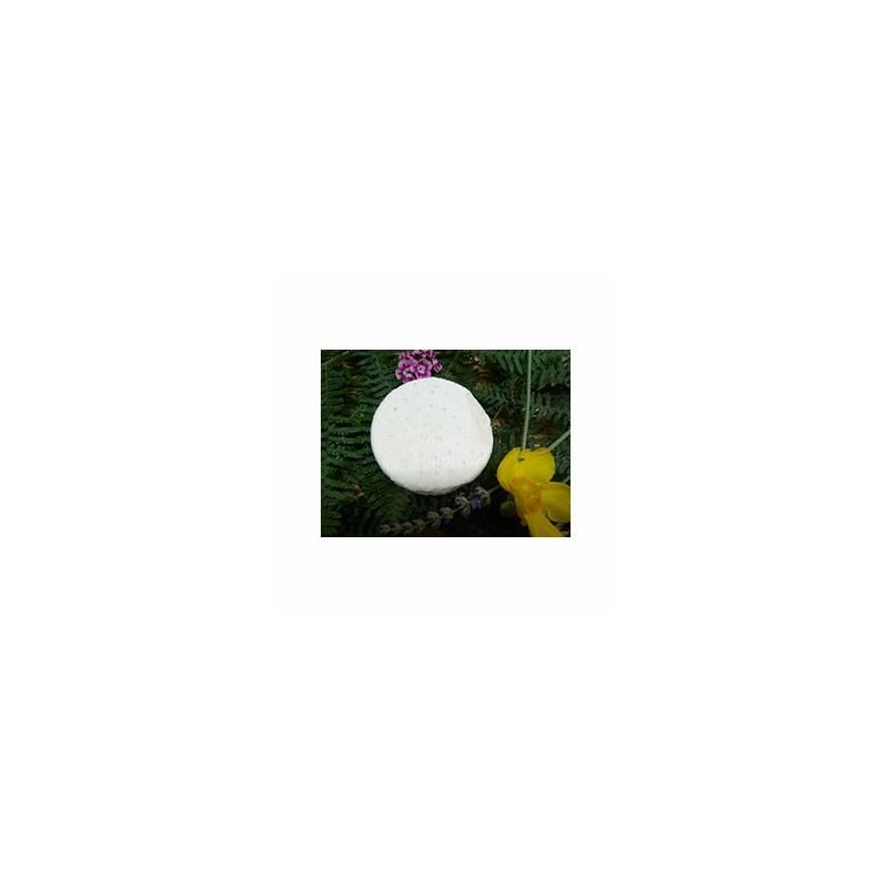 Le frais-Sourians bio chèvre frais - 160g-LA CAPRARIUS