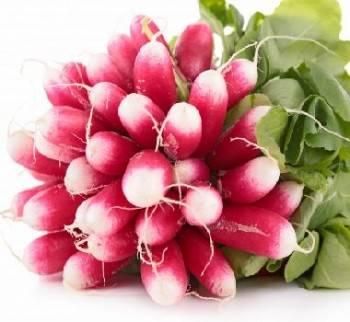 Légumes biologiques-Radis rose biologique - la Botte-RONAN LE GALL