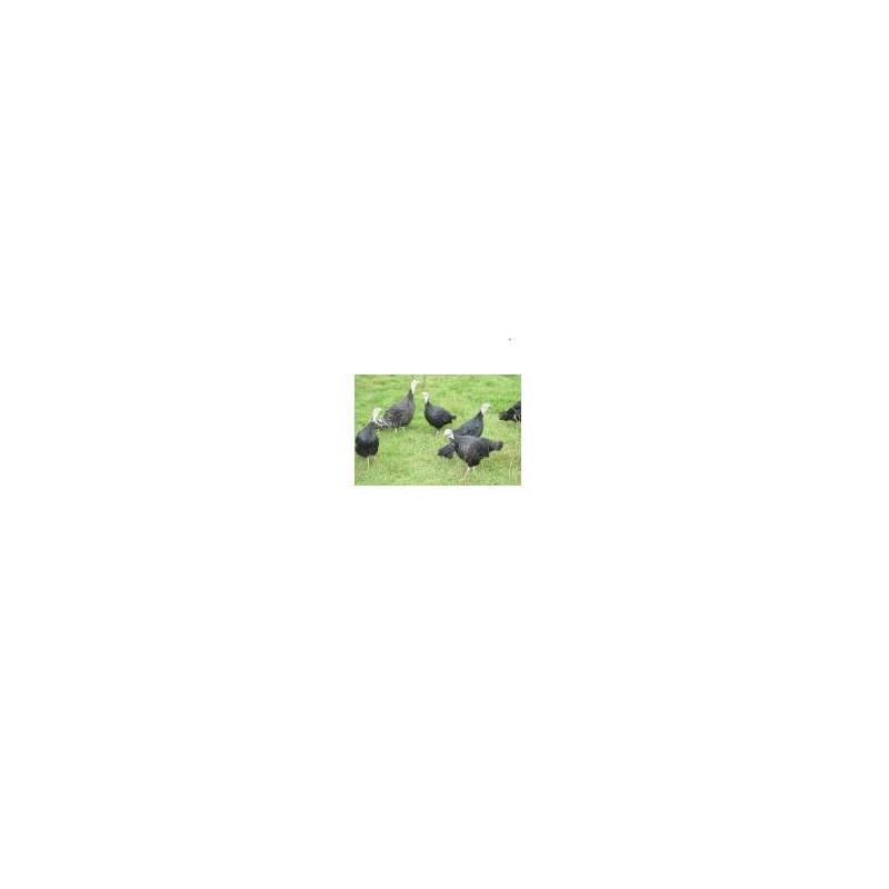 Dinde-Dinde noire (6 pers)Haie Du Val- 2.8 à 3.2 Kg-FERME HAIE DUVAL