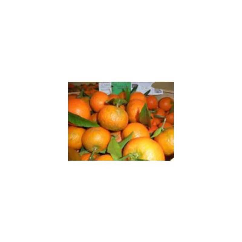 Fruits frais-Clémentine (Corse) - Kg-SUBERY NON BIO