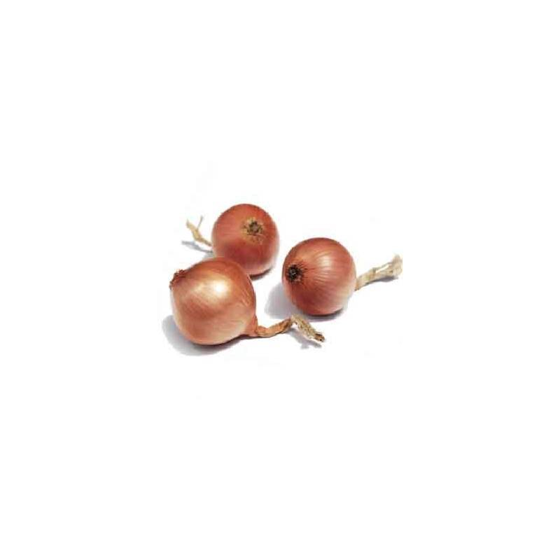 Ail et oignons bio-L'oignon rosé bio- kg-BIO RENNES