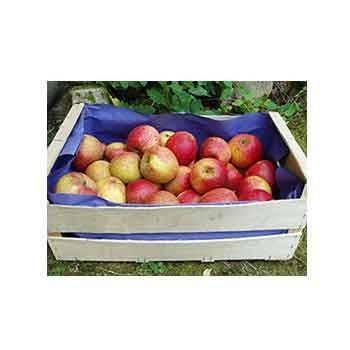 Fruits et légumes-Pomme Royal Gala - Kg-SUBERY SARL