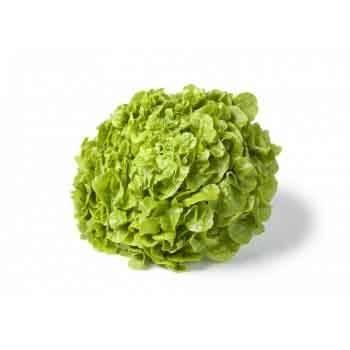 Salades, herbes aromatiques-Feuille De Chêne Bio Verte - Unité-LEGUMES DE VALBO
