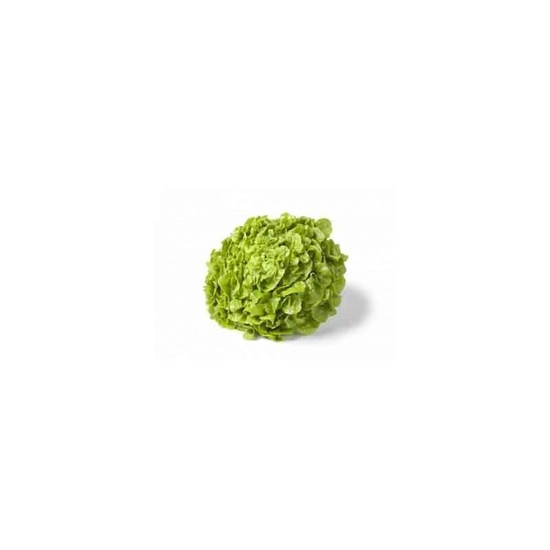 Salades, herbes aromatiques-Feuille De Chêne Bio Verte - Unité-RONAN LE GALL