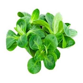 Salades, herbes aromatiques-Mâche biologique- 100 g-RONAN LE GALL
