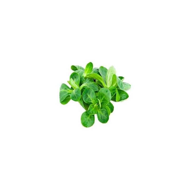 Salades, herbes aromatiques-Mâche biologique- 100 g-LEGUMES DE VALBO