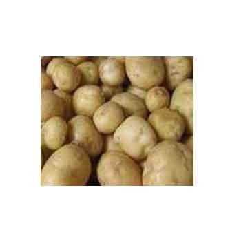 Poireaux, pommes de terre-Pommes de terre- Europa au kg-GAEC BOCEL NON BIO