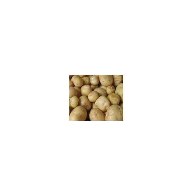 Poireaux, pommes de terre-Pommes de terre- Europa 10 kg-GAEC BOCEL NON BIO