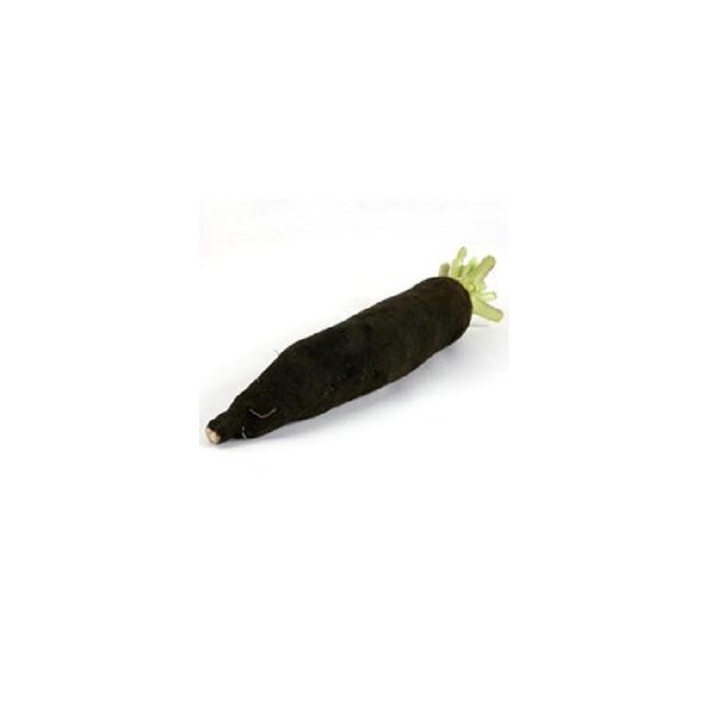 Choux, radis ...-Radis noir long bio - la pièce-RONAN LE GALL
