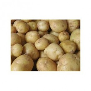 Poireaux et pommes de terre-Pommes de terre- charlotte au KG-GAEC BOCEL