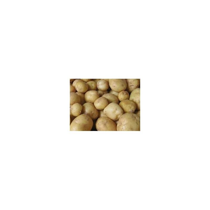 Poireaux, pommes de terre-Pommes de terre- charlotte au KG-GAEC BOCEL NON BIO