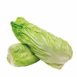 Salades-Chicorée Pain de Sucre bio-RONAN LE GALL