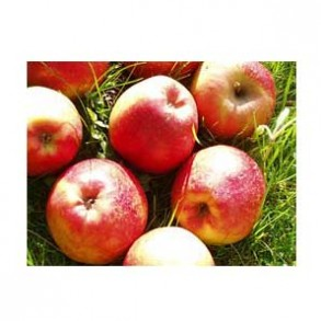 Pommes, poires et kiwis-Pomme Biologique - Dalinette kg-BIO RENNES