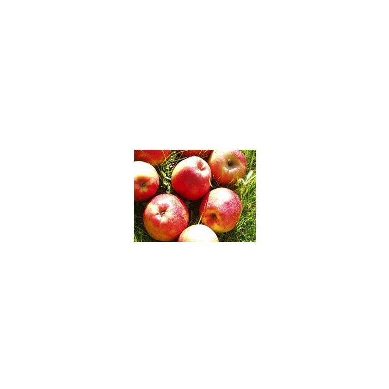 Les fruits d'ici-Pomme Biologique - Dalinette kg-BIO RENNES