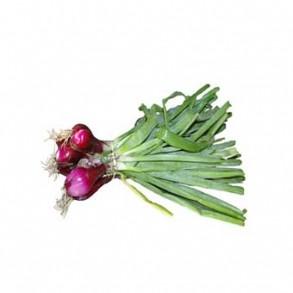 Ail, oignons et échalotes-Oignon rosé - la botte-RONAN LE GALL