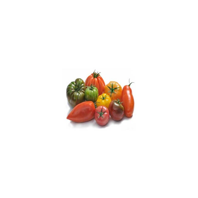 Tomates et concombres-Tomate assortiment - kg-GAEC BOCEL NON BIO