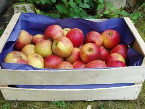 Pommes, poires et kiwis-Pomme Biologique -Pilot au kg-VERGER MITAN CRANNE