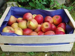 Pommes, poires et kiwis-Pomme Biologique -Dalirian au kg-VERGER MITAN CRANNE