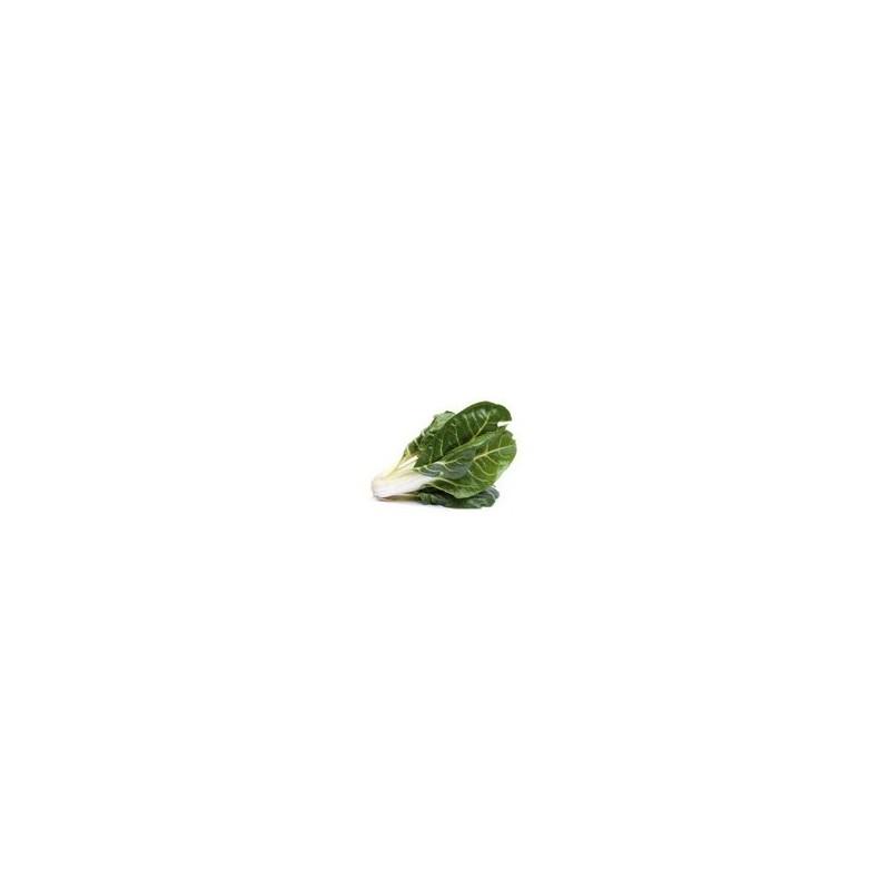 Divers légumes -Blettes - kg-GAEC BOCEL NON BIO