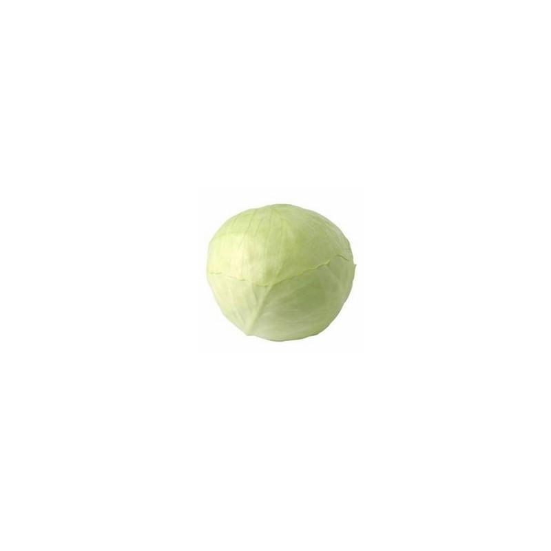 Artichaut, brocolis et choux-Chou lisse blanc bio- la pièce-BIO RENNES