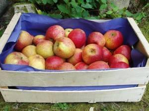 Les fruits d'ici-Pomme Biologique -Jubilee au kg-VERGER MITAN CRANNE
