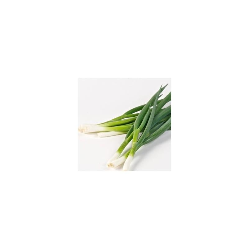 Ail, oignons et échalotes-Oignon ciboulle bio - la botte-LEGUMES DE VALBO