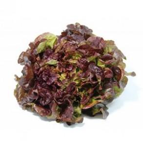 Salades, herbes aromatiques-Feuille de Chêne bio Rouge-RONAN LE GALL