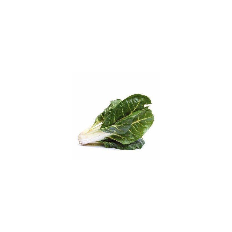 Légumes biologiques-Blette biologique- le pied-RONAN LE GALL