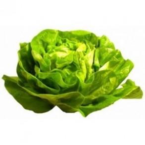 Salades, herbes aromatiques-Laitue bio - la pièce-RONAN LE GALL