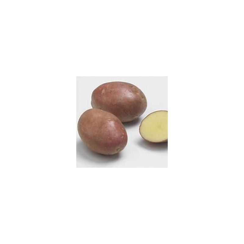 Poireaux, pommes de terre-Pomme de terre désirée bio-1kg-LEGUMES DE VALBO
