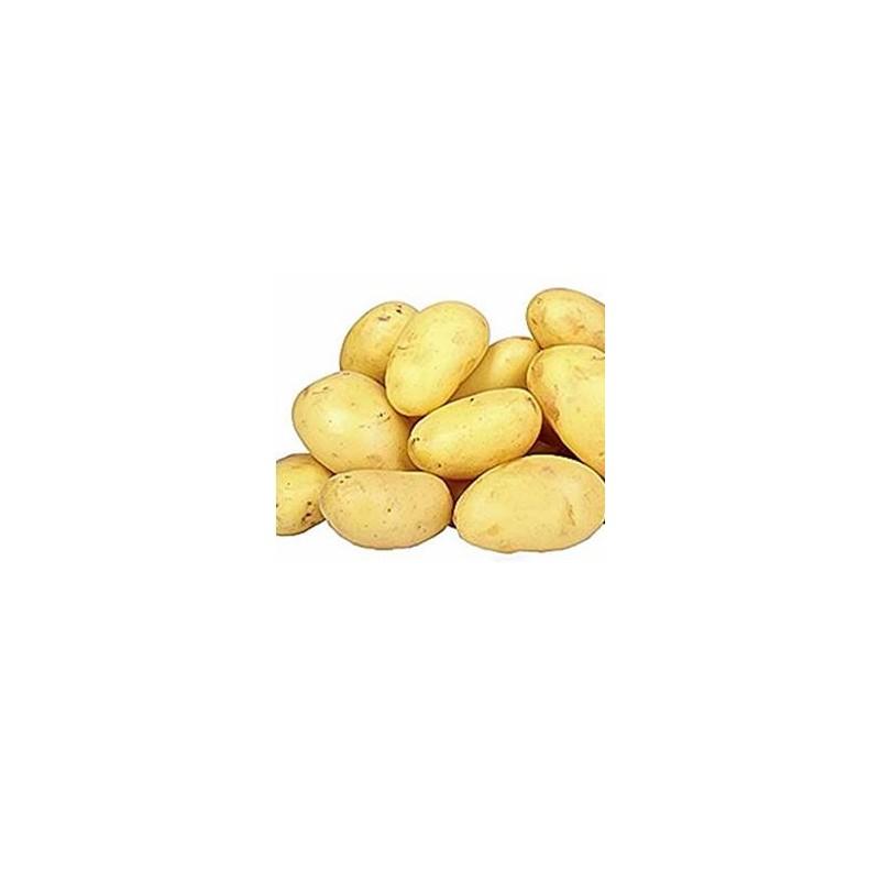 Poireaux, pommes de terre-Pomme de terre Azilis bio-1kg-LEGUMES DE VALBO