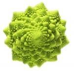 Légumes biologiques-Chou Romanesco bio- la pièce-GABILLARD EARL