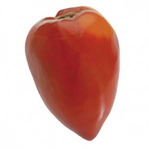 Tomates et concombres-Tomate coeur de boeuf -kg-GAEC BOCEL NON BIO