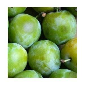 Rhubarbe, abricot, pêche et prune-Prune Reine Claude -500 grs-BIO RENNES