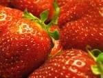 Fruits BIO-fraise biologique Cirene - 250 g-LEGUMES DE VALBO