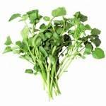 Salades, herbes aromatiques-cresson biologique- botte-RONAN LE GALL
